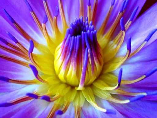 coeur d\'une fleur
